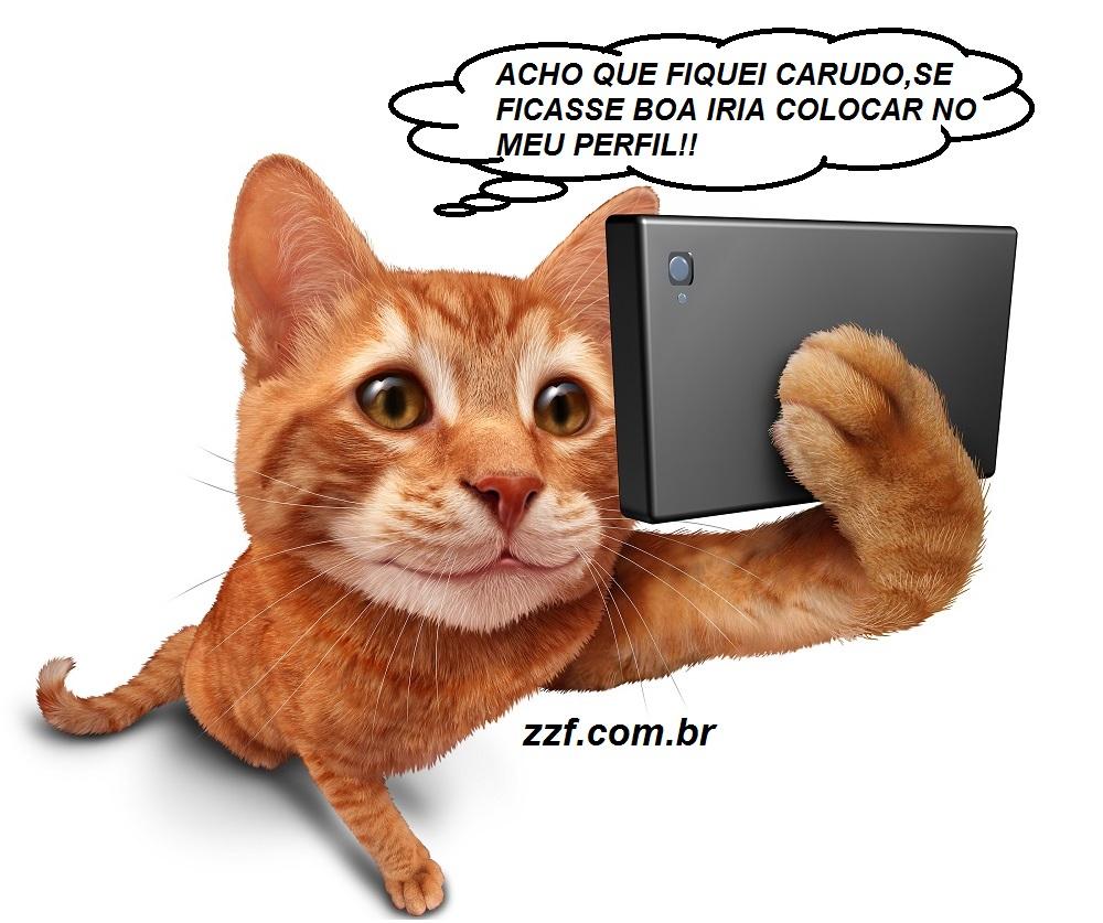 Zzf Seu Blog De Frasesdicas E Coisas Legais Gatinho Fazendo Selfie