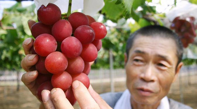 Manfaat Anggur Untuk Tubuh Dan Inilah Khasiatnya