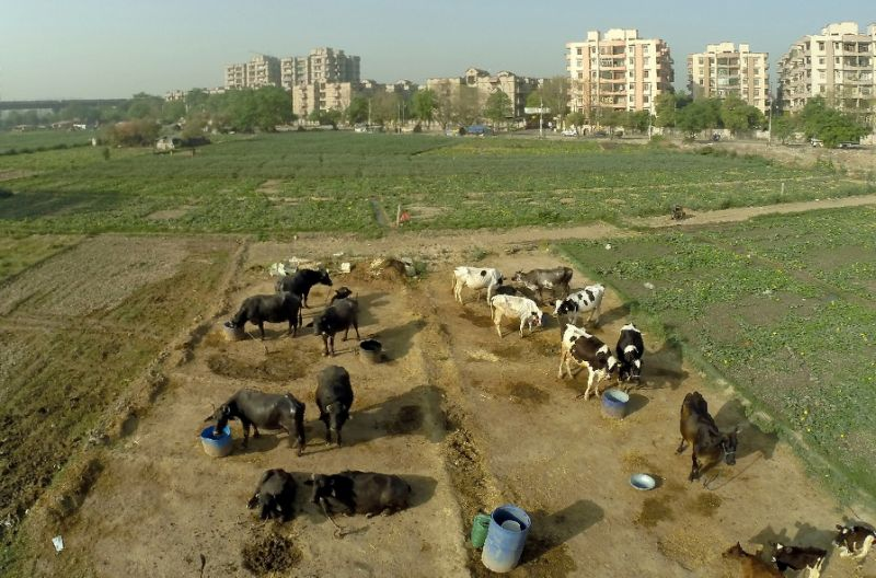India mob kill two Muslim men over suspected cow theft