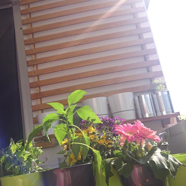 [DIY] Balkonien - Pflanzen auf Mini-Balkon mit Hilfe eines Lattenrostes