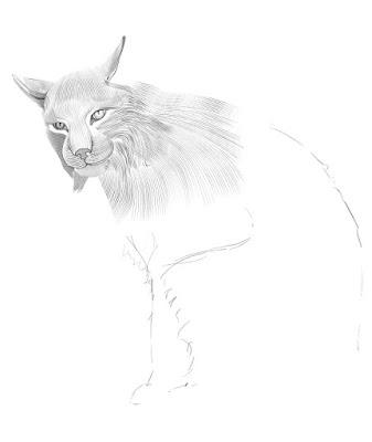 как нарисовать рысь