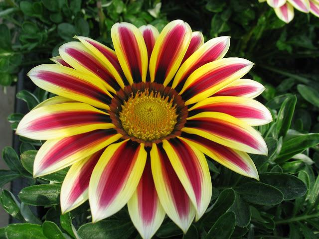 Ana çiçeklenme türleri