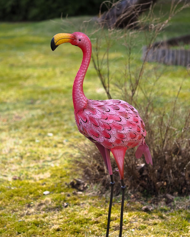 Flamingo-koriste puutarhaan