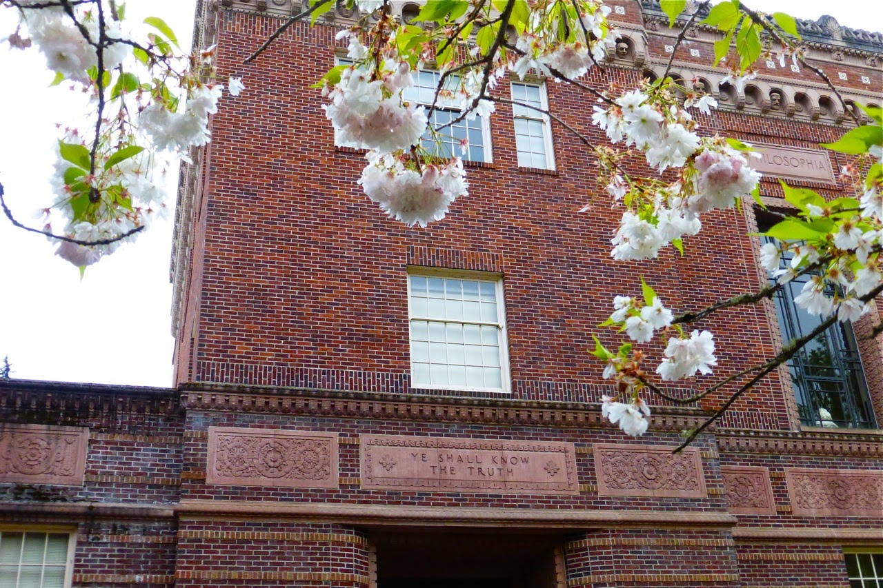spring, spring stroll, spring blossoms, spring campus walk