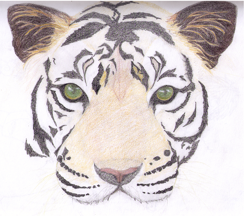 Gallery For > Drawing Of Tiger Face
