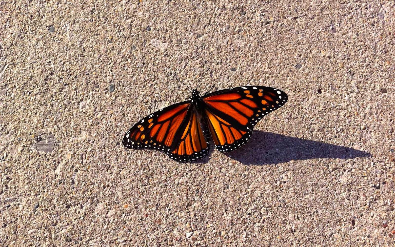 Mooie oranje vlinder op de grond
