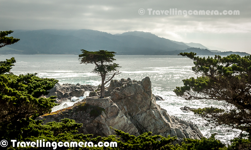 Few days back, we were discussing about US trip with friends last year and I realized that Lone Cypress has made a strong impression in my mind. Lone Cypress is a tree around Pebble beach which is standing on a granite hill on 17-mile drive. This tree is a western icon which is popularly known as one of the most photographed trees in North America. Lone Cypress is visible from the road of 17 Mile Drive around Pacific Ocean. This is just next to Pebble beach. Above photograph shows the man looking at Lone Cyress from 17 Mile Drive Road. A visit to 17 Mile drive is incomplete without taking a halt at this point and witness this miraculous tree. The tree is located between Cypress Point Golf Course and the Pebble Beach Golf Links, which are two of world's most popular golf grounds. We noticed various interesting trees around this place which were located around the road itself. It seems that Lone Cypress is very old, probably more than 250 years old. Lone cypress tree has been scarred by fire once and held in place with cables for 65 years. The Monterey Cypress grows naturally only in Pebble Beach and Point Lobos.Lone Cypress, Pebble Beach, lush green Golf Courses, huge villas make 17 Mile drive very special and one should definitely plan for this drive when in California. The other interesting place around 17 Mile drive is Monetary Aquarium.