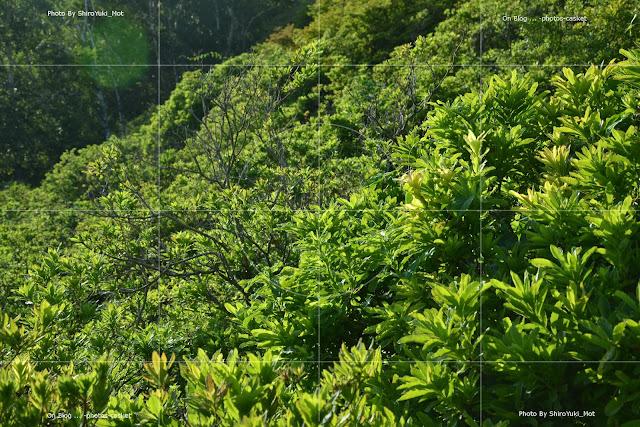 草木 濃い緑 Lush Life Stan Getz