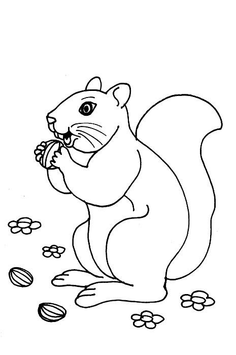 Desenhos Para Pintar E Imprimir Desenhos Para Colorir Esquilos