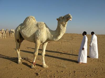 محافظه سعوديه من اقدم المناطق الماهوله في الخليج