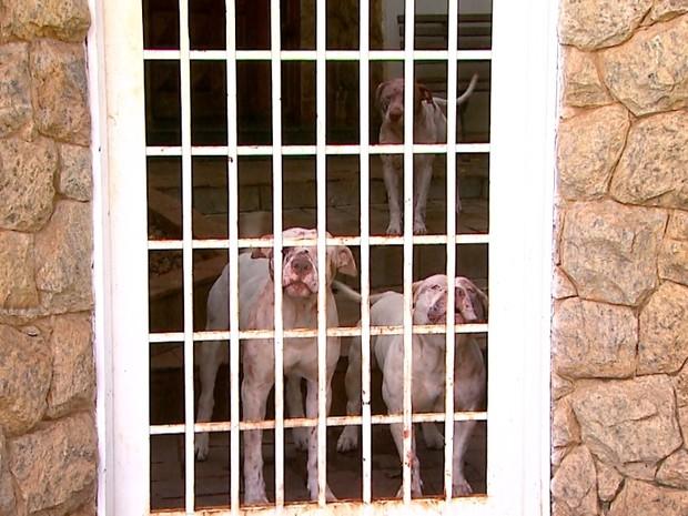 Jardineiro é atacado por três pitbulls durante o trabalho em Ribeirão Preto