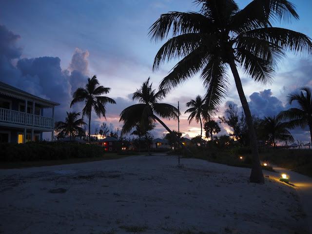 coucher soleil palmiers