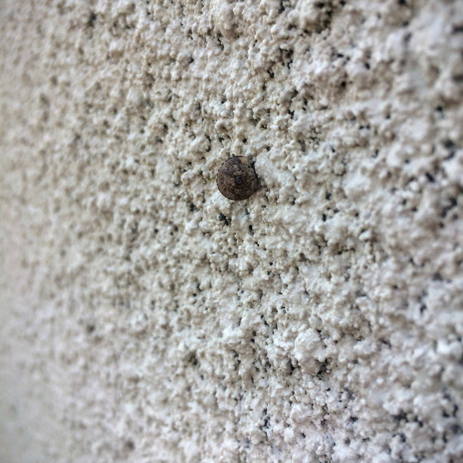 snail, small snail, snail on wall,  school runs, pembrokeshire, rural life, everyday, nature walk, girl with umbrella, umbrella, rainy walk, thomas the tank, spiderweb, spiderweb in rain, pink flowers, pink chysantheums,