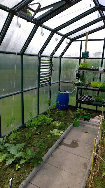 frisch gepflanzte  Tomaten im Gewächshaus (c) by Joachim Wenk