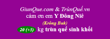 Trùn quế huyện Krông Buk