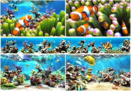 Sim Aquarium 3.8 Build 58 Premium Full Patch