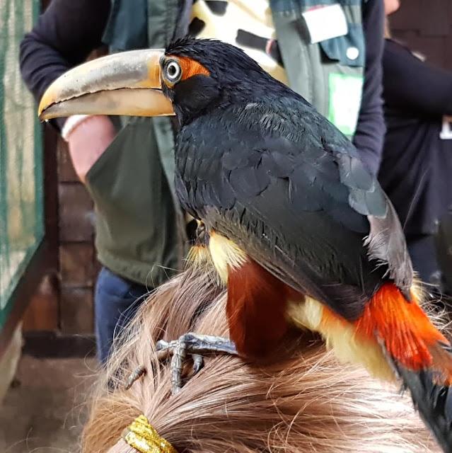 Phantastische Vögel aus aller Welt: Unterwegs im Weltvogelpark Walsrode (+ Verlosung). Die Tukane zu füttern, zu streicheln und zu fotografieren war ein Traum.