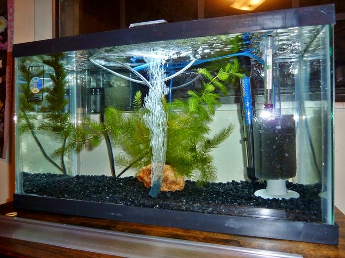 Media Filter Aquarium Hias  Dunia Air