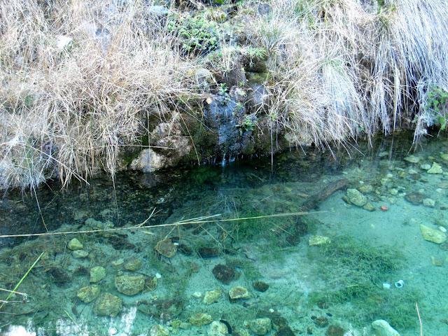 Bassa de la font del Carritx