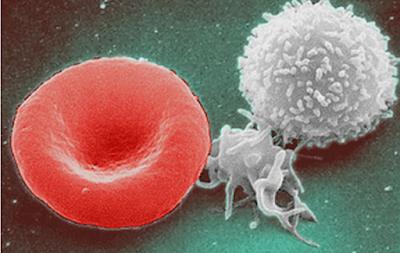sistema-immunitario-rigenerare