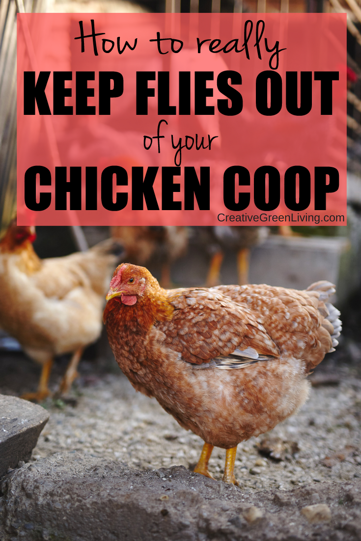 the best way to control flies in a chicken run creative green living