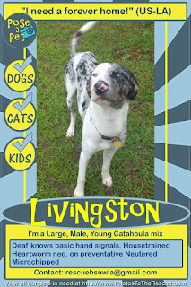 Adopt Livingston flyer from Pose-a-Pet