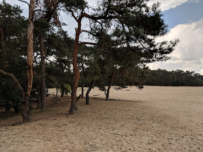 The Loonse en Drunense Duinen (Loonse and Drunense Dunes) national park in the south of the Netherlands, between the cities of Tilburg, Waalwijk & 's-Hertogenbosch.