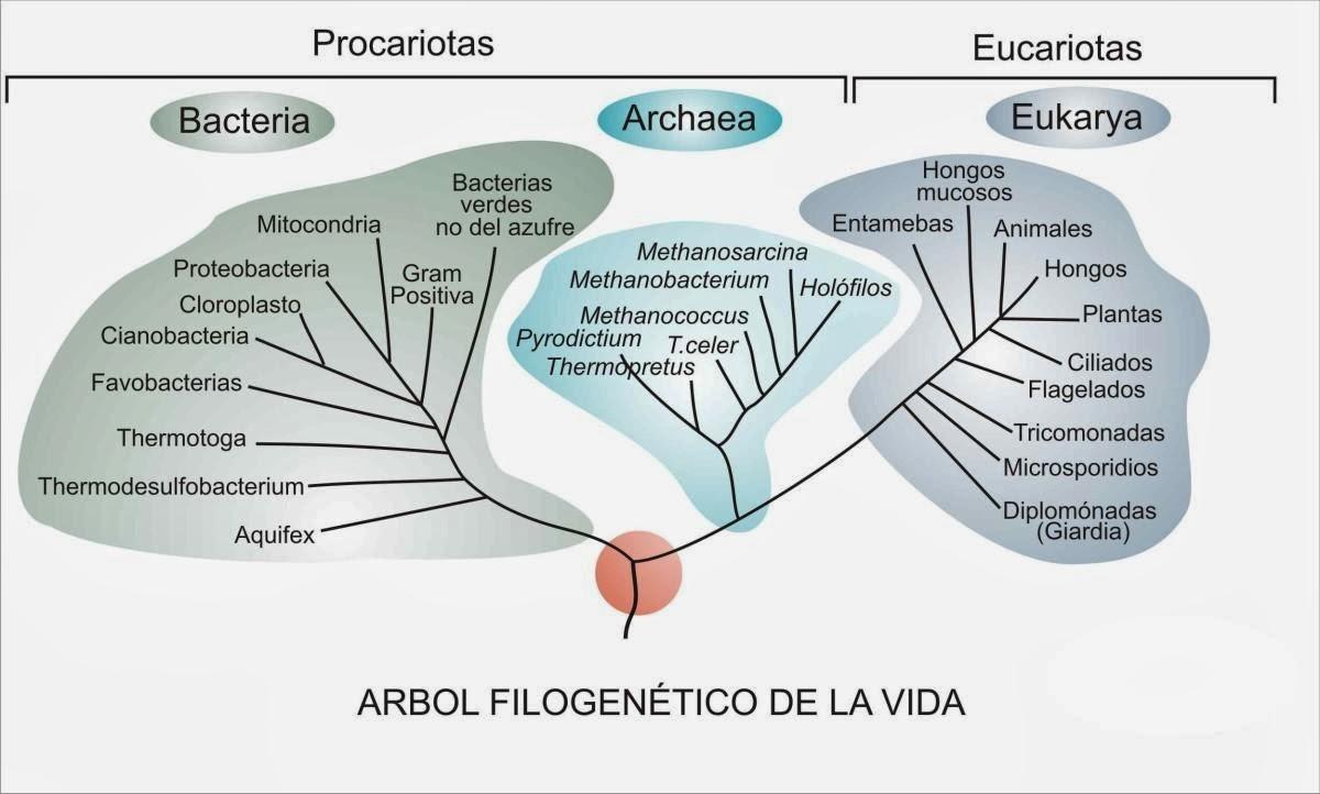 Astrofísica y Física: Sheldon Cooper, la taxonomía de Linneo, el ...