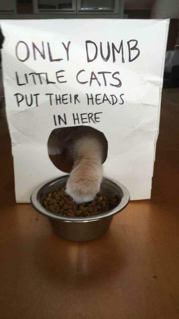 Funny cats - part 265, funny cat pictures, cute cats, best cat images