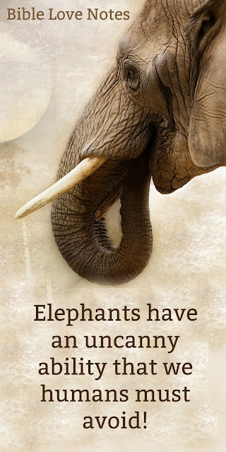 Some interesting facts about Elephants & Grudge-holding