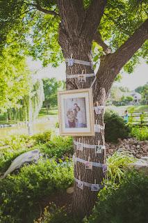 a photo tree