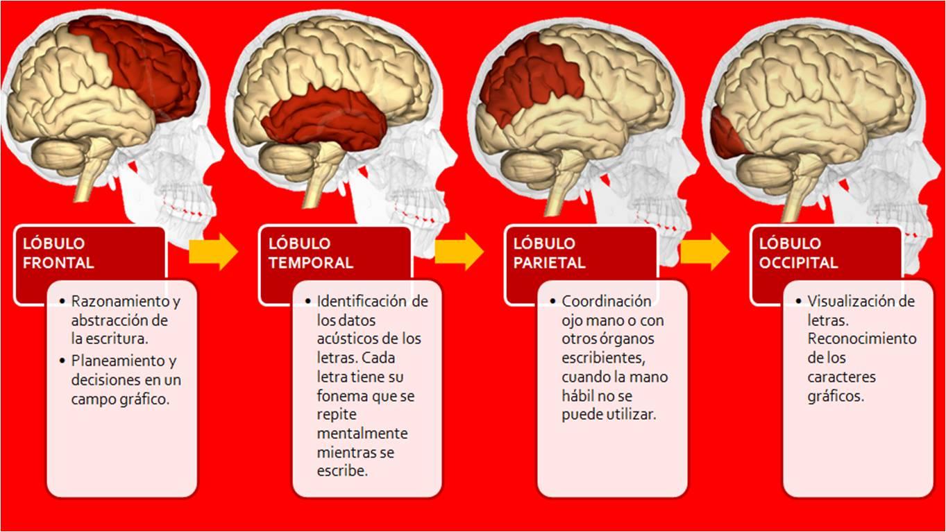 Sistema Neuroescritural© de Evelyn Aguilera: ¿QUIERES POTENCIAR TU ...