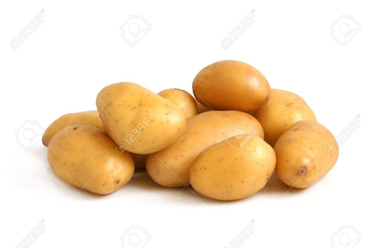 Pagine di pergamena perch le patate possono fare male - Pagine di ringraziamento e divertimento ...