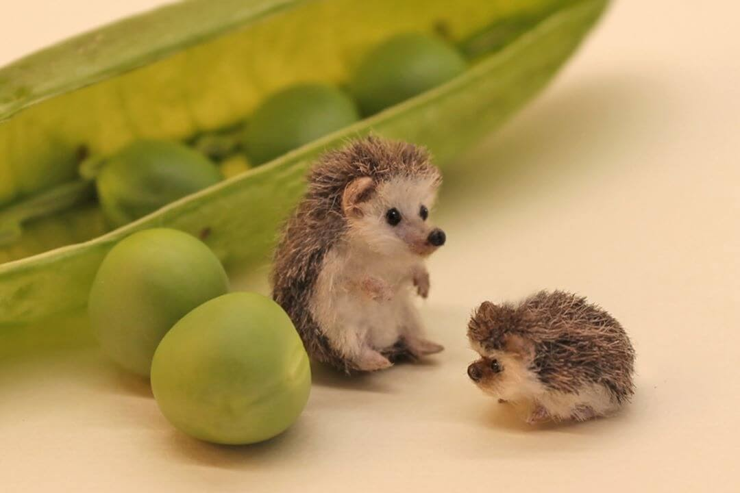 02-Hedgehog-Mom-and-Baby-Katie-Doka-Hand-Sculpted-Dollhouse-Miniature-Animals-www-designstack-co