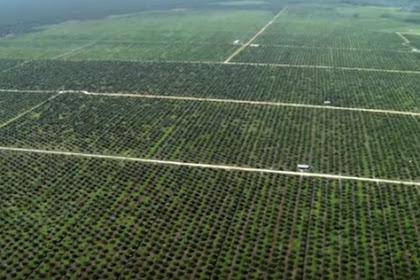 Mengejutkan! Memanfaatkan Hutan Ternyata Bisa Dilakukan Secara Non-Deforestasi Dengan HCS Aproach Toolkit Versi 2.0