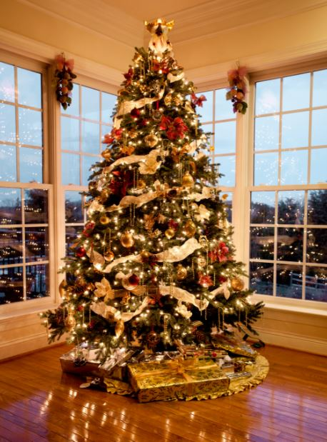 Images of Christmas Trees