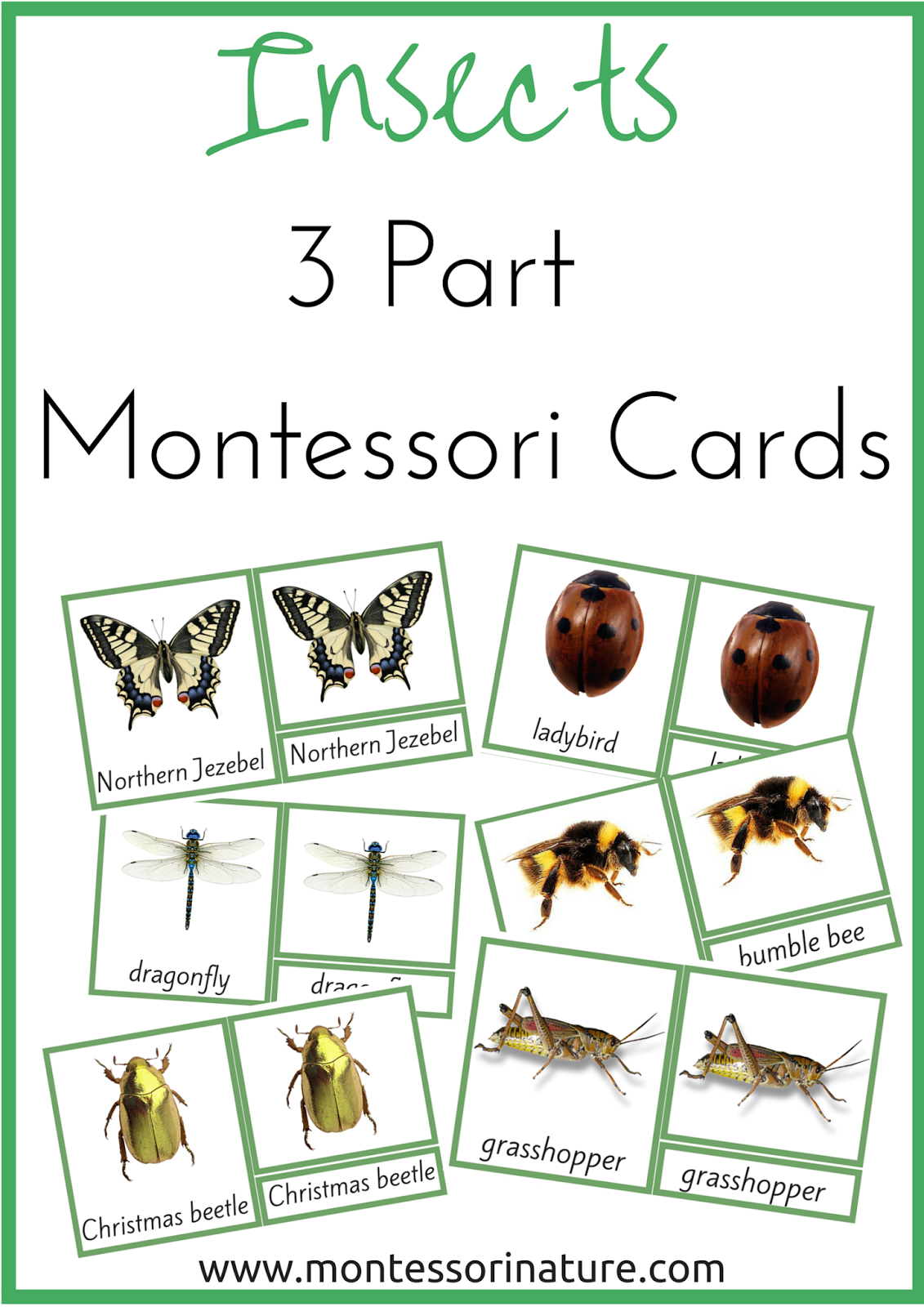 Insects 3 Part Montessori Nomenclature Cards