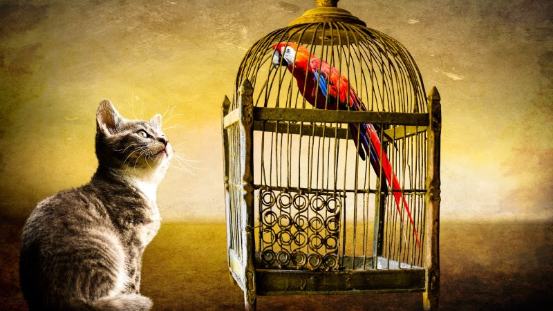 Little Cat and Red Parrot