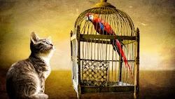Little Cat and Parrots