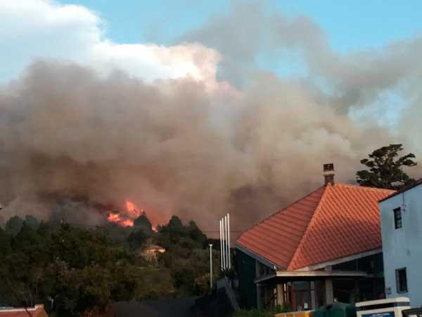 Mueren animales en  incendio  Garafía, La Palma