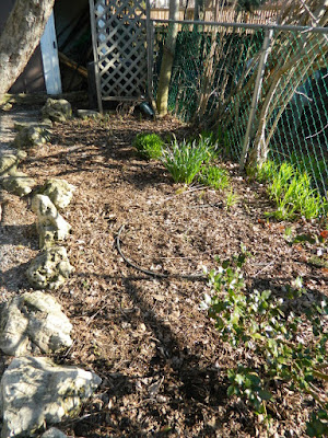 Parkdale Spring Backyard Garden Cleanup Before by Paul Jung Gardening Services a Toronto Gardening Company