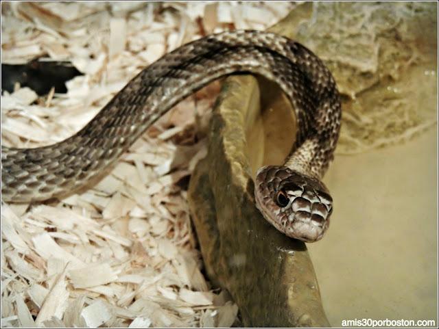 Texas Discovery Gardens: Serpiente