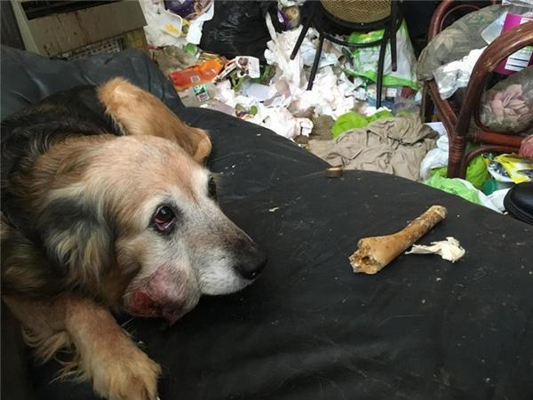 Chú chó bị bỏ rơi