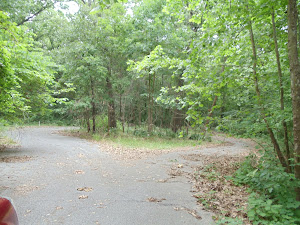 Wooded Bella Vista lot