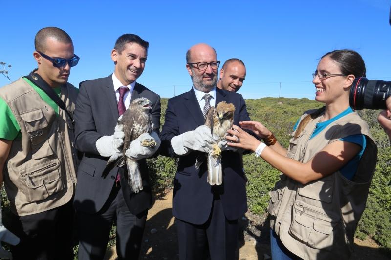 Ministro do Ambiente liberta águia-calçada
