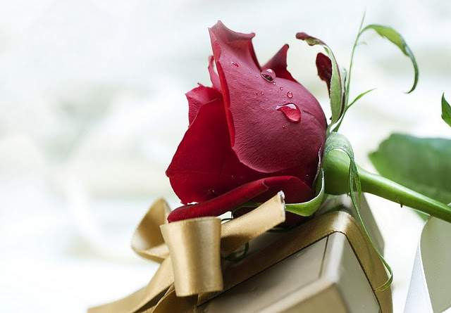 Love Rose Flowers Flower Hd Wallpapers Images Pictures Tattoos