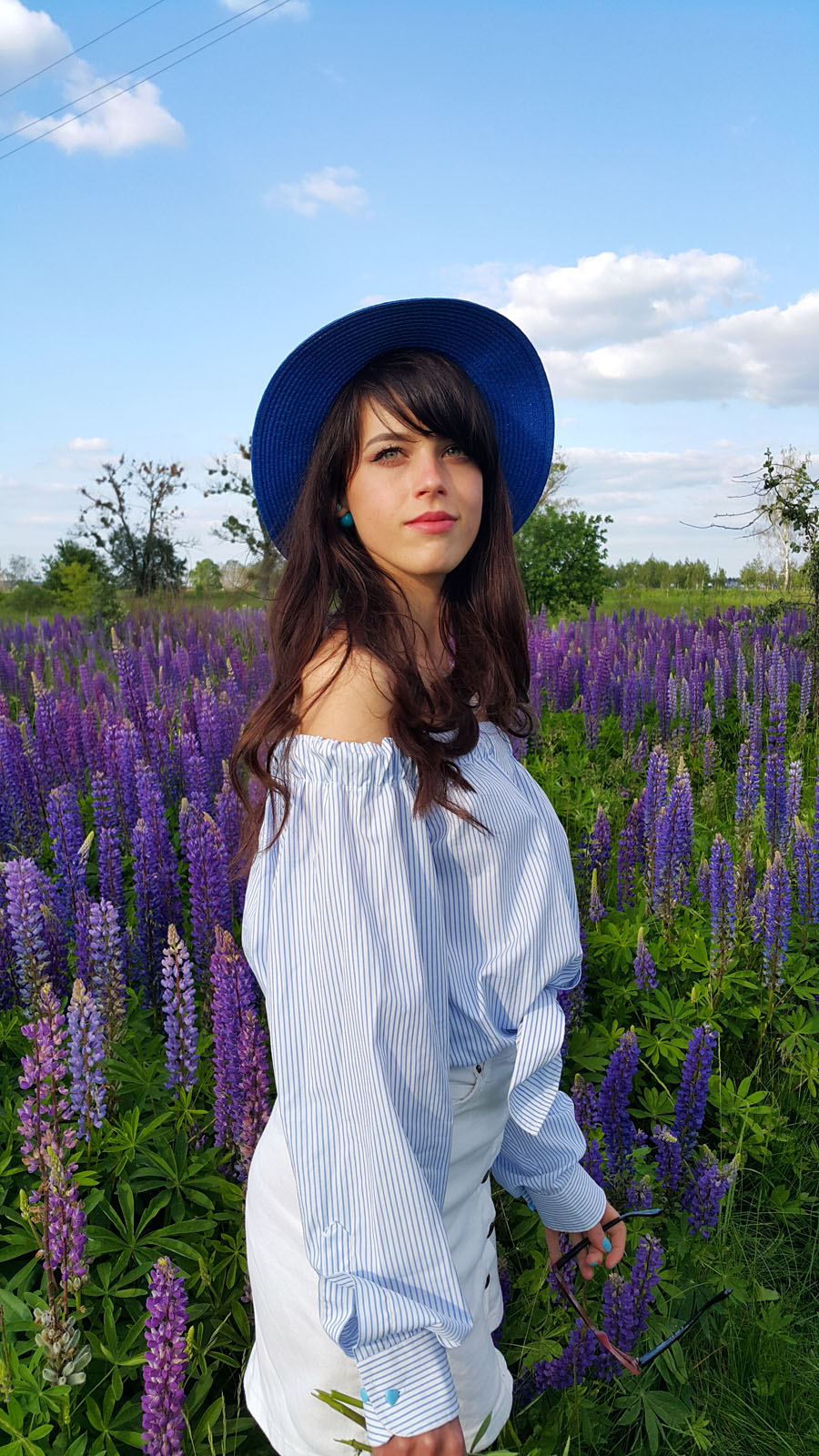 люпин, поляна цветов