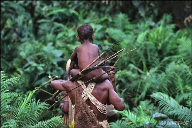 2 Kampung di Papua dapat izin pengelolaan hutan desa