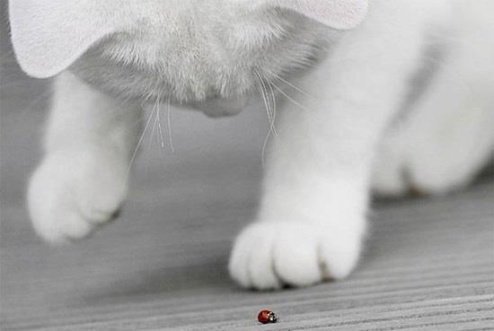 Gatito con catarina