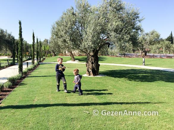Ramada Kazdağları otelin zeytin ağaçları ile süslü bahçesinde çocuklar oynarken, Güre Edremit